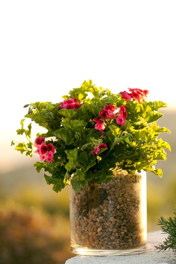ZM flowers