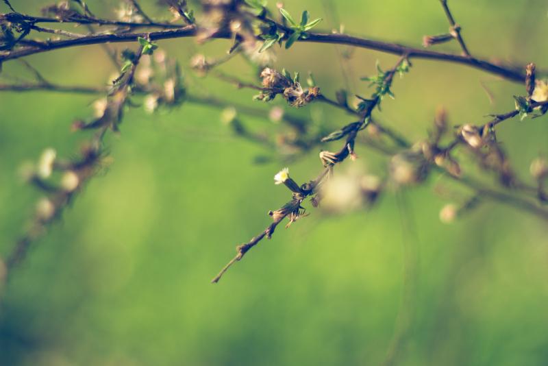 still life plants photography