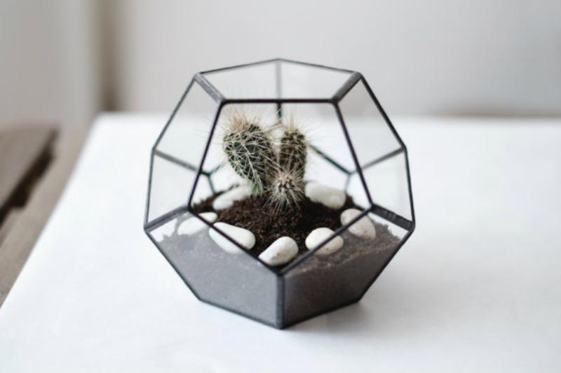 mini cactus in a terrarium