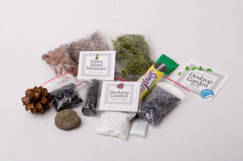 terrarium growing kit