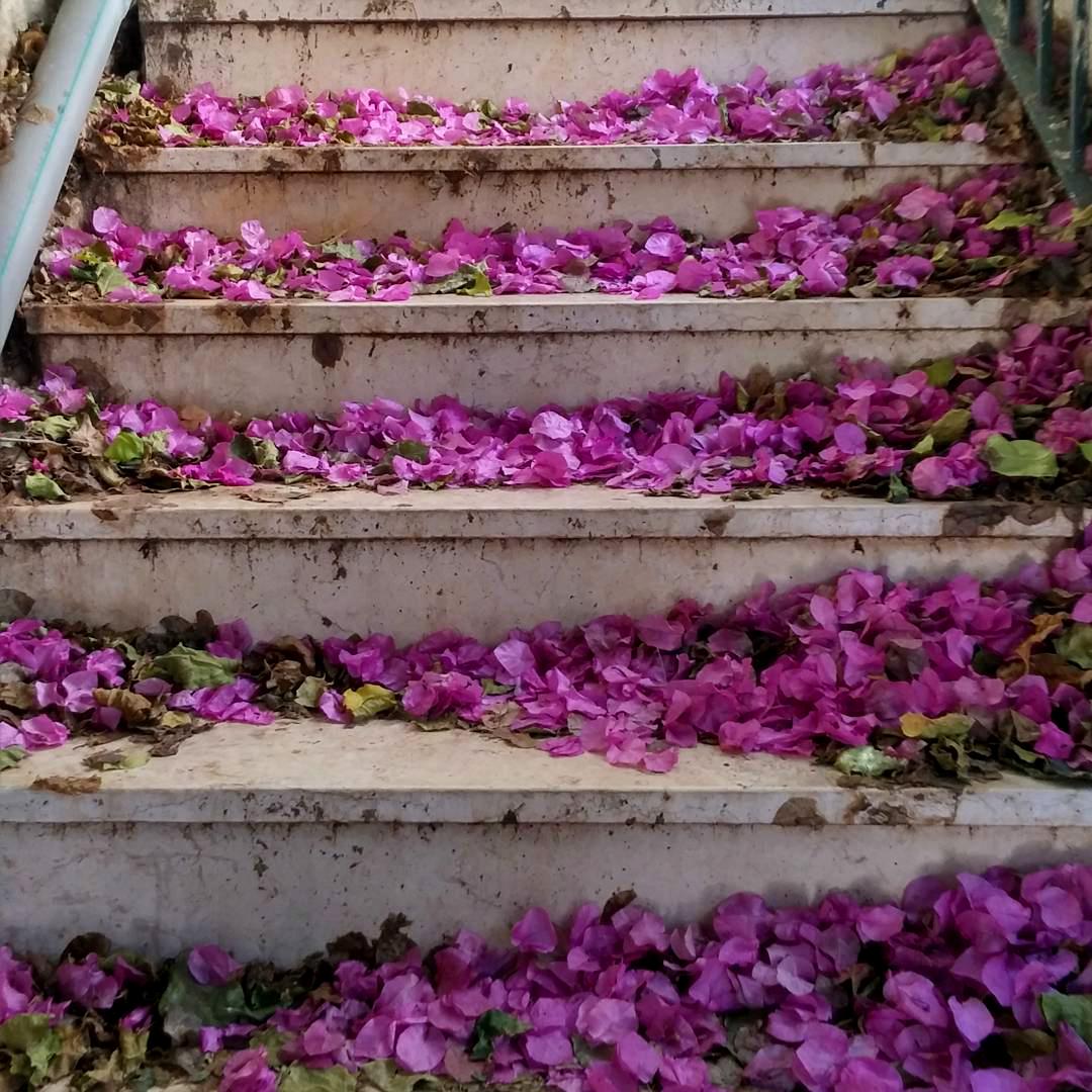 ein carem steps