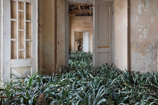Gohar-Dashti-abandoned-houses-in-Iran-overtaken-by-nature-