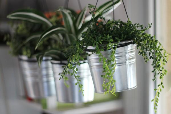 DIY design it yourself hanging plants